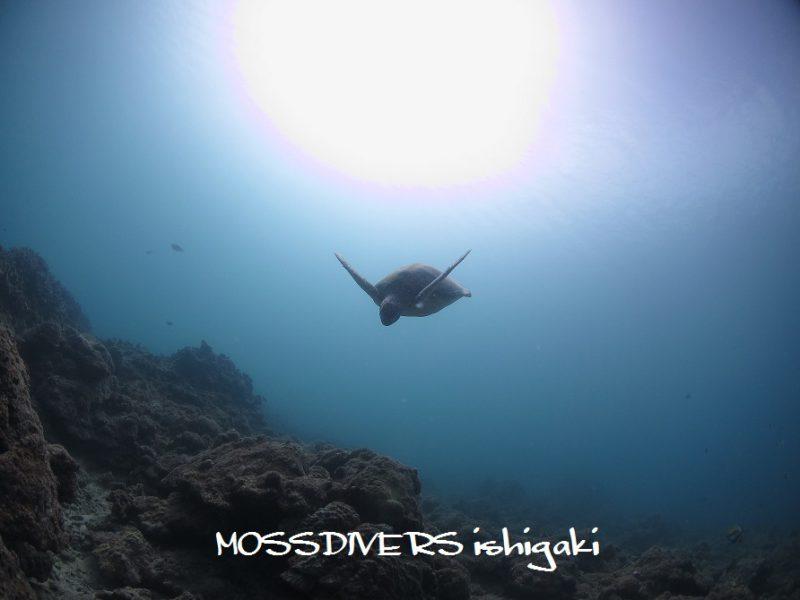 IMG_8748